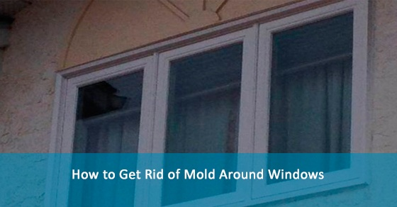 How to Get Rid of Mold Around Windows
